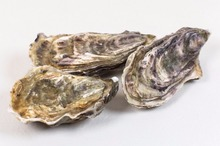 Zeeuwse oesters mand