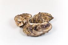 Franse oesters fine de claire